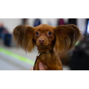 У собак слух лучше, чем мы думали