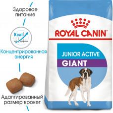 Royal Canin giant Junior active для щенков гигантских пород от 0 до 12 мес 15 кг.