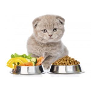 Что лучше: натуральный или готовый сухой корм для животных?
