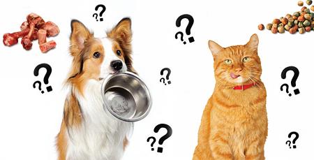 выбираем сухой или натуральный корм для домашних животных